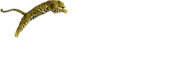 Locarno Festival Official Selection